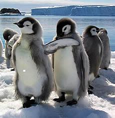 20080410203302-pinguinos.jpg