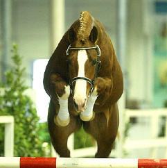20080410155229-caballos-holandes-1.jpg