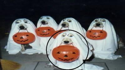 20110530133110-perro-fantasma.png