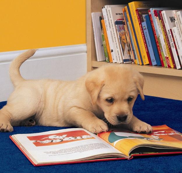 perro lee